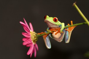 pink_flower_with_tree_frog