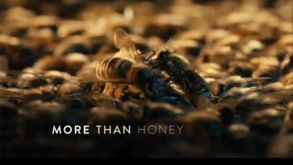 More-Than-Honey