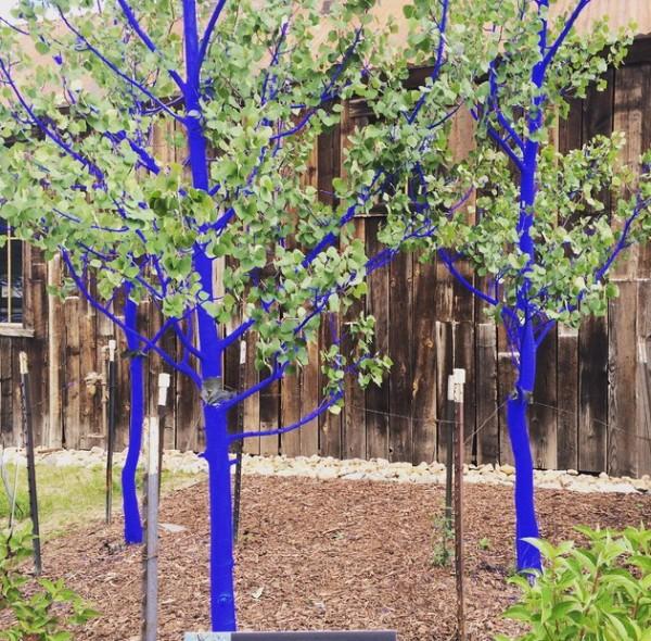 blue trees 001