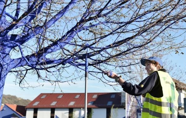 blue trees 006