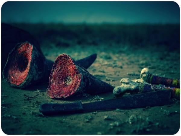 Ziman_Bones_9Rhino-Horn-830x622